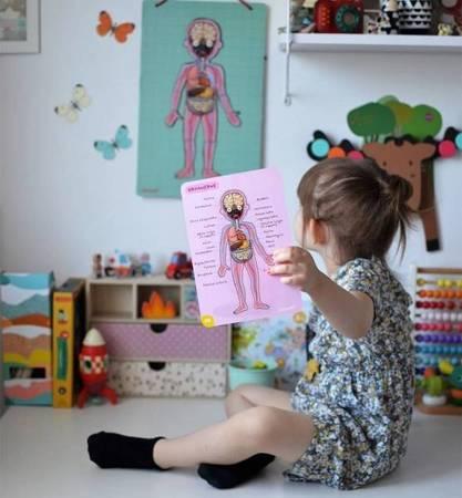 Układanka magnetyczna Ciało człowieka, Janod - plansza do nauki części ciała w j.angielski,, francuskim, niemieckim, hiszpańskim i inne